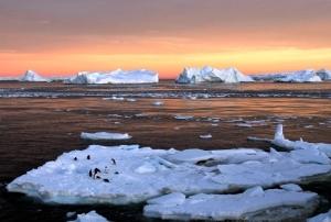 antarctic-icepenguins